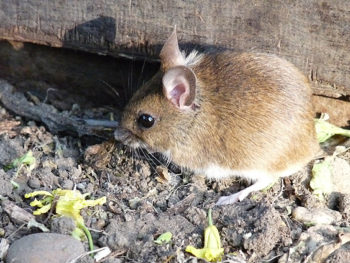 Permalink to: Microfiction: House Mouse